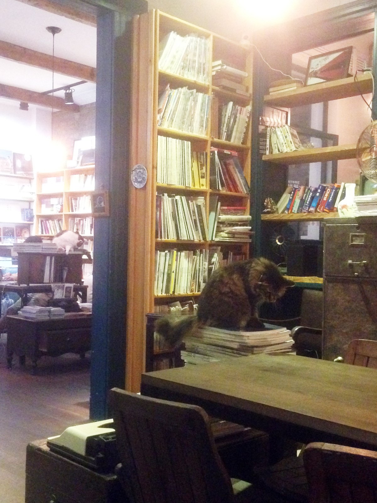 Cat in Cafe